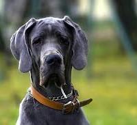 dog pic2